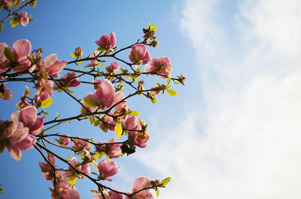 blommor och himmel